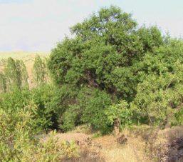 Erzincan Refahiye Sıralı Köy Resimleri